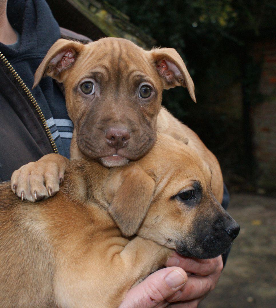 2 pups - HOMED 027_zpsc80928a6