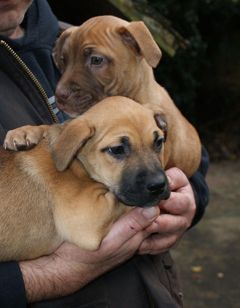 2 pups - HOMED 028_zpsade059dd