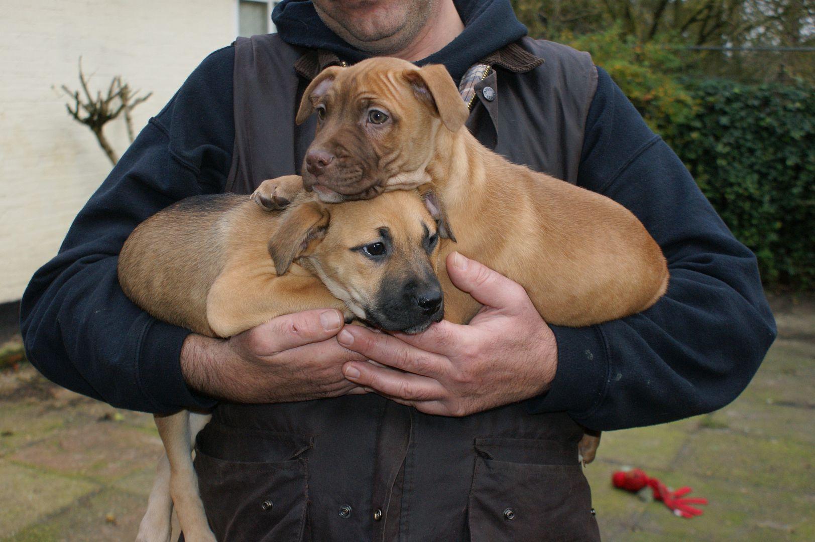 2 pups - HOMED 031_zps35ad08ed