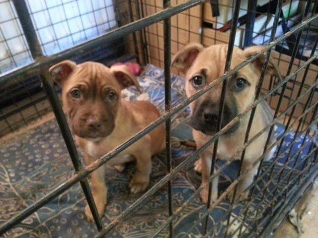2 pups - HOMED Pups1_zpse783d6b6