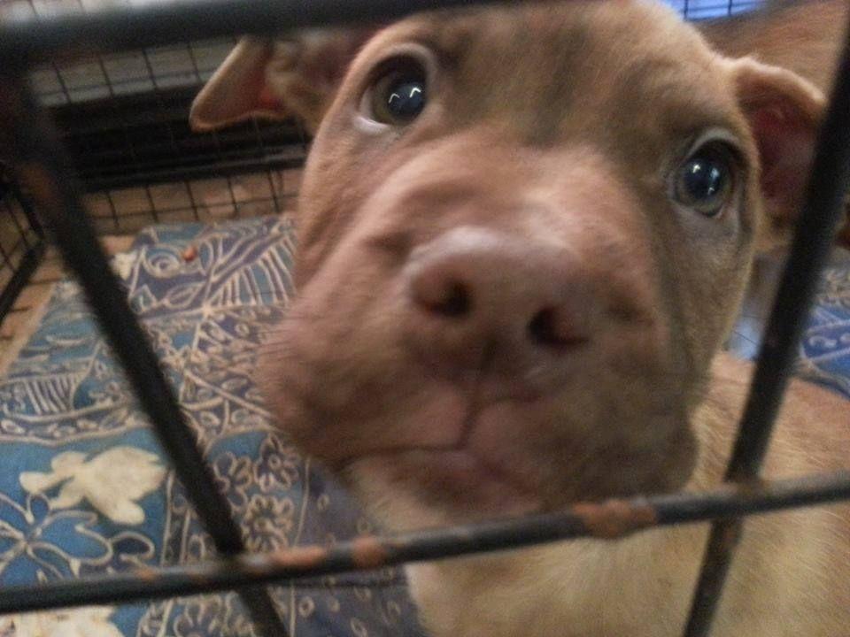 2 pups - HOMED Pups3_zps466fc961