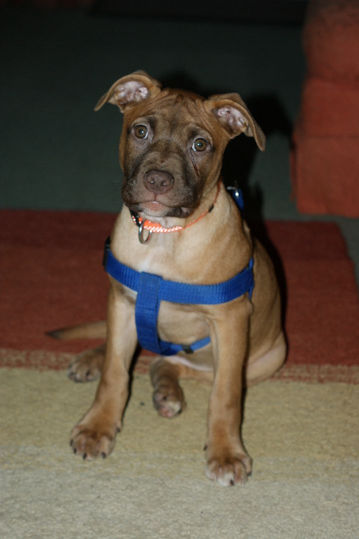 Rufus (the male pup) HOMED! 001_zpsb749ce30
