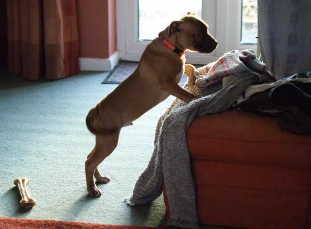 Rufus (the male pup) HOMED! 013_zps4cec8529