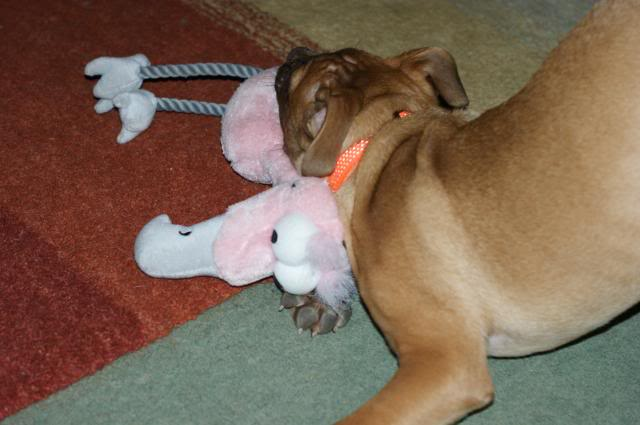 Rufus (the male pup) HOMED! 023_zps11cc1013
