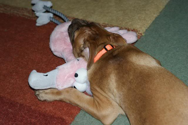 Rufus (the male pup) HOMED! 024_zps52364de4