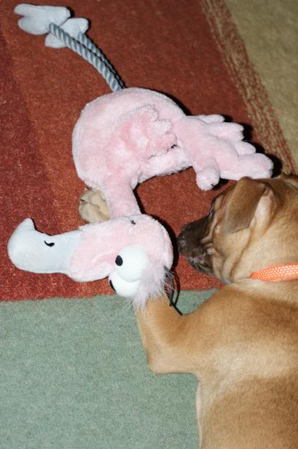 Rufus (the male pup) HOMED! 026_zpsbfba2b7d