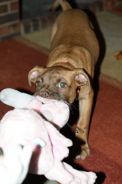 Rufus (the male pup) HOMED! 029_zpse5bac8c7