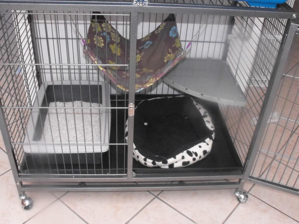 question cage DSCF1128