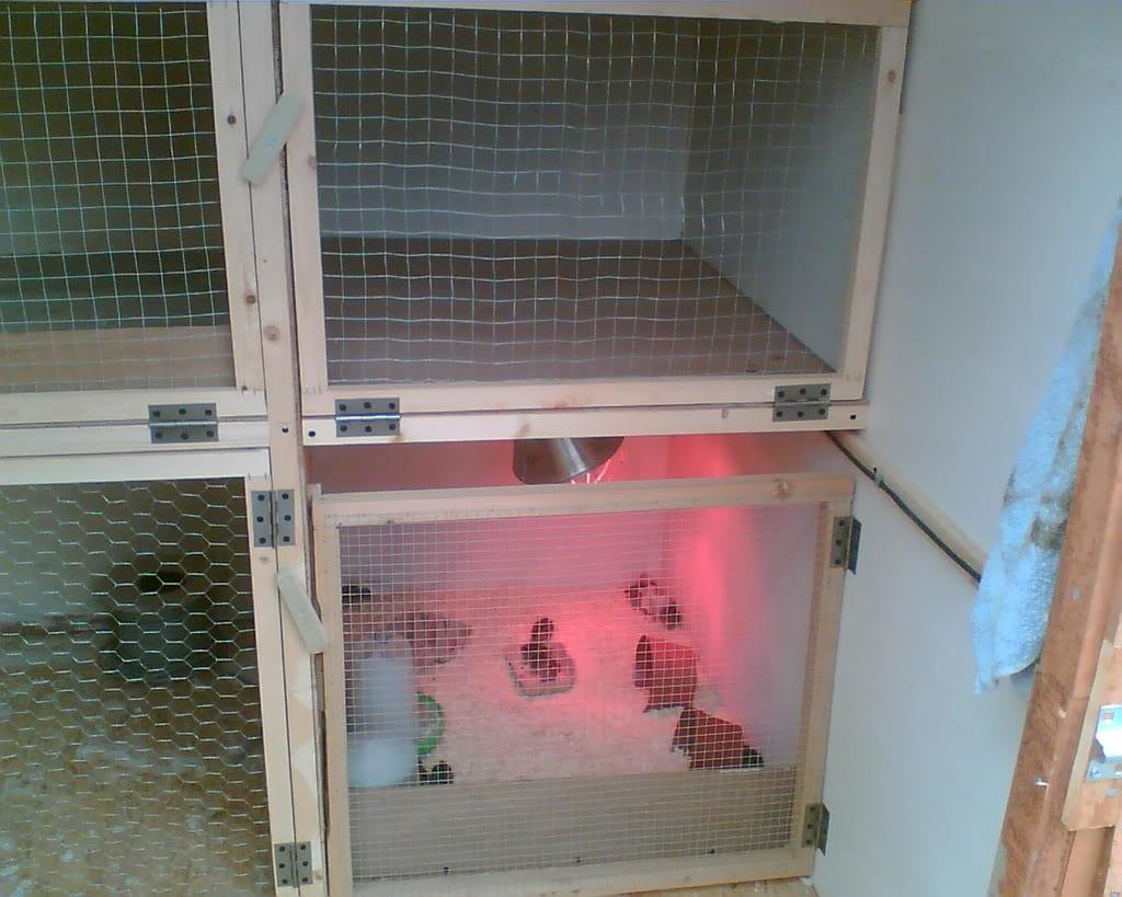 Quail Addict alert! My Set up Image007