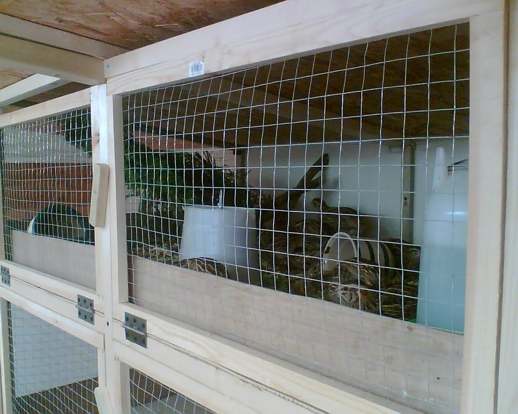 Quail Addict alert! My Set up Image008
