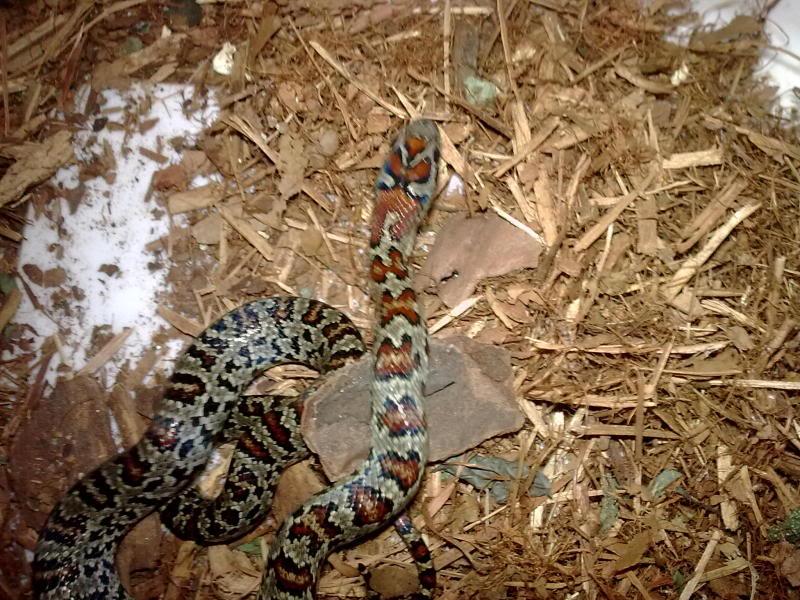 A few non venomous Copyof23052009_008