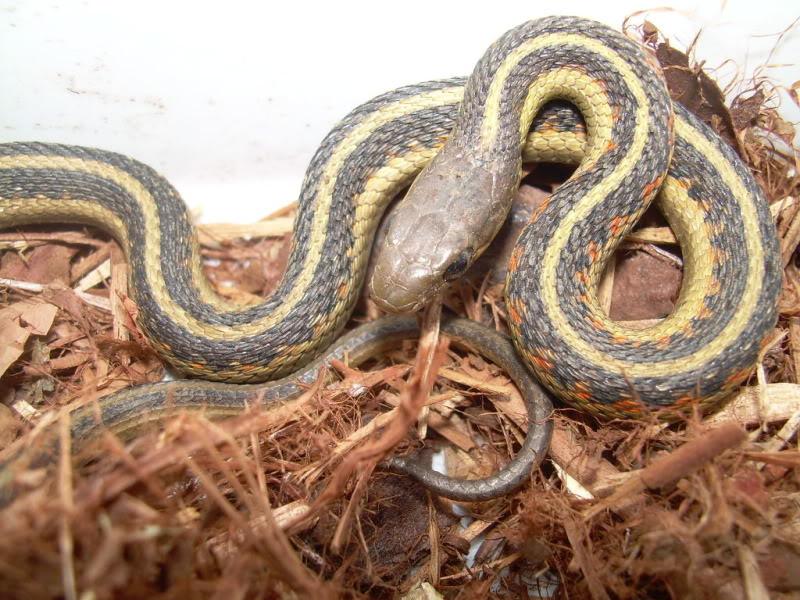 A few non venomous CopyofDSCN6841