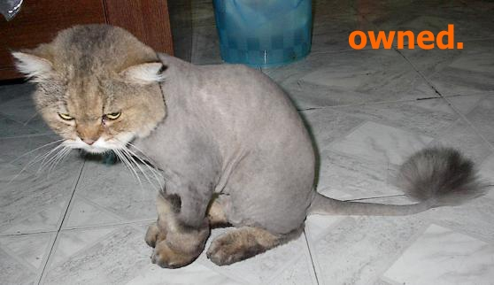 Howdy (which somehow became war of the vids) - Page 2 Owned-cat_shaved_452