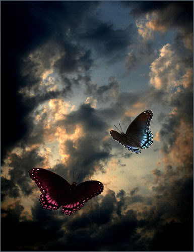 Fotografije životinja Butterflys-1