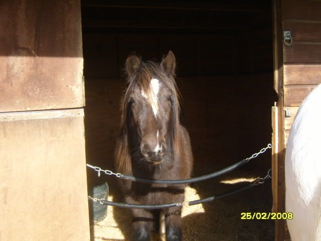Post your favourite picture of your horse... S1030848