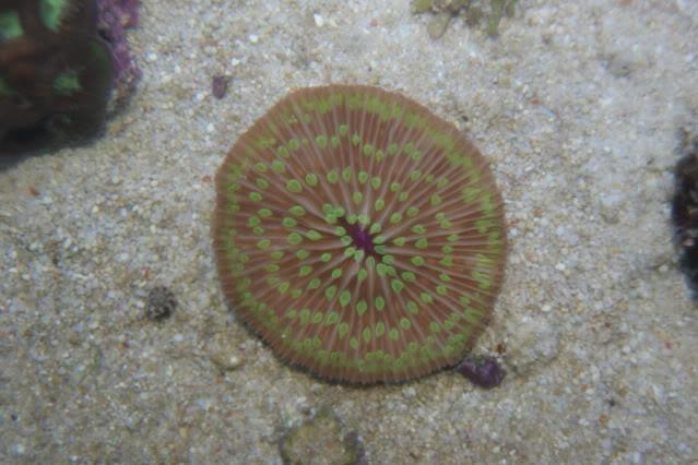Mer de Corail DSC09413
