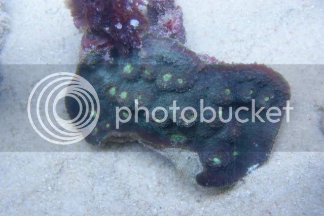Mer de Corail DSC09415