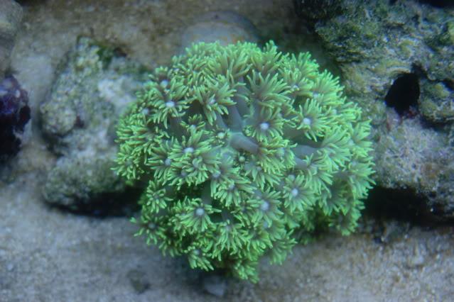 Mer de Corail DSC09423