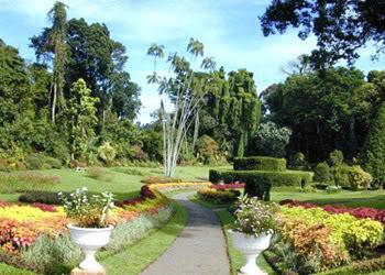 королевский сад GardenkingsMinas-Tirit