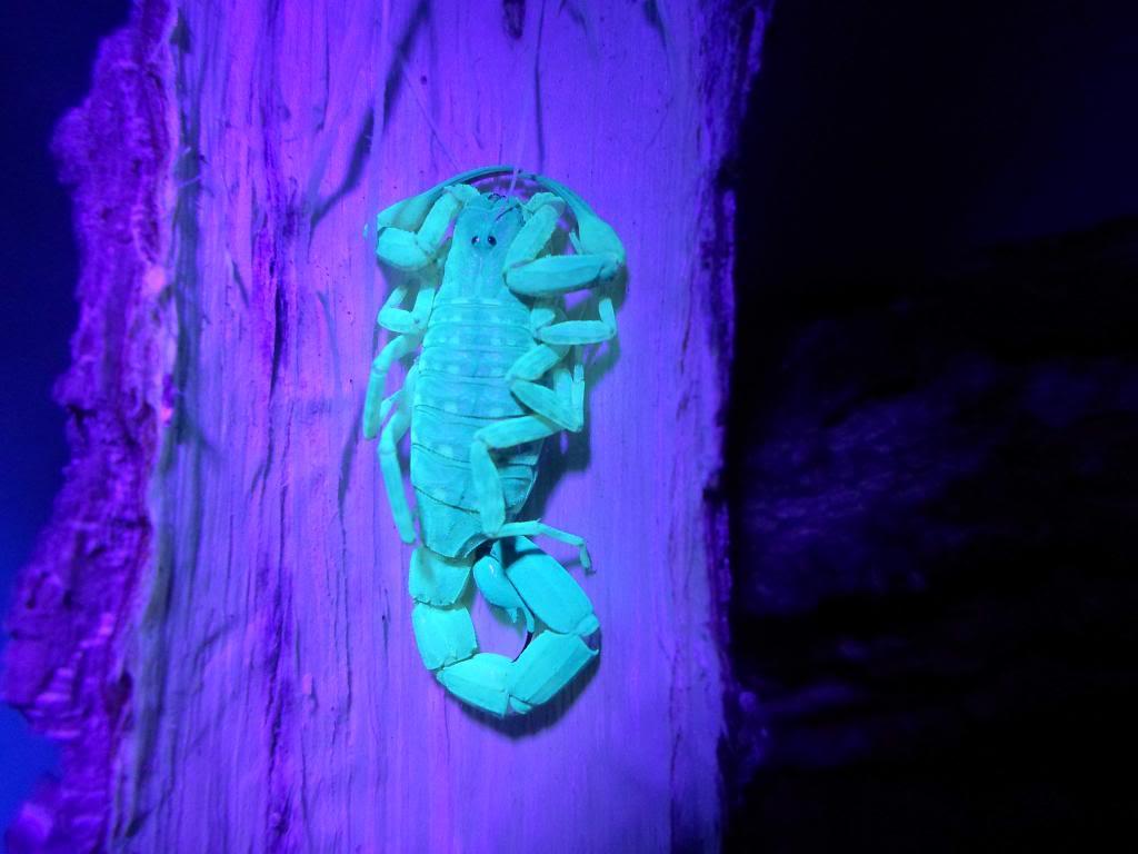 my bark scorpions SAM_1191