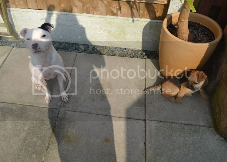 Pics of my dogs 17thdayzoey_zpsfhaub0pi