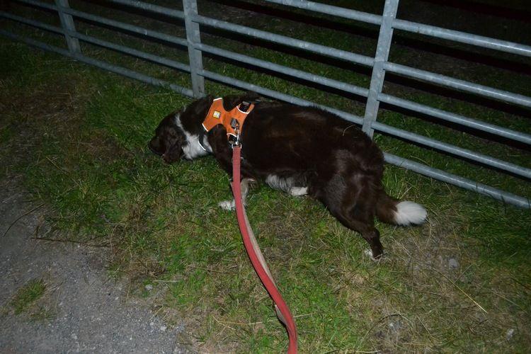 Pics of my dogs 21stdaybrowlk1_zps2yb5uzpe