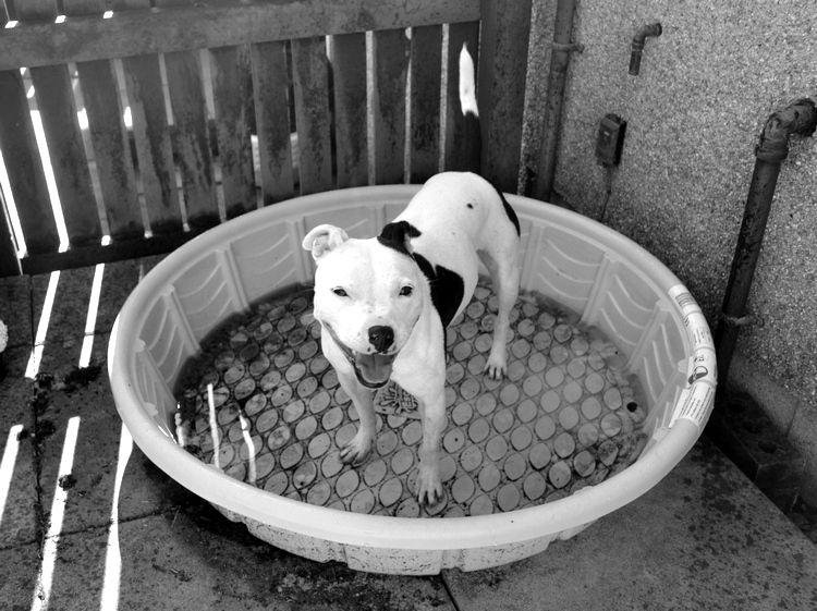 Pics of my dogs Paddlezobnw_zpspr2twbgi