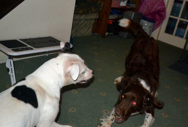Pics of my dogs Rawr1_zpsl1udjgwo