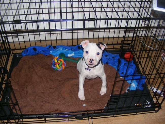 Pics of my dogs Pup_zps3c0c0128