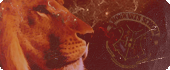 Prefecta de Gryffindor (6º)