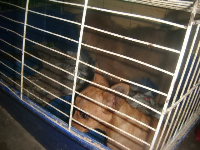 Cartagena, se necesita ayuda... Tienda de animales!! Image15