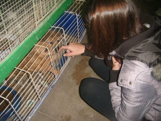 Cartagena, se necesita ayuda... Tienda de animales!! Image18