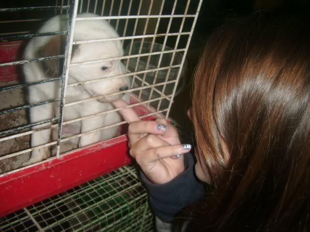 Cartagena, se necesita ayuda... Tienda de animales!! Image20