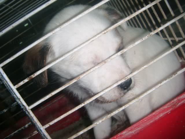 Cartagena, se necesita ayuda... Tienda de animales!! Image21