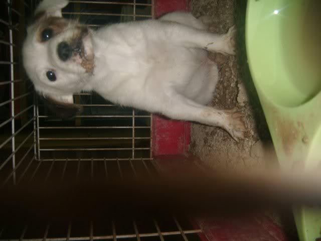 Cartagena, se necesita ayuda... Tienda de animales!! Image22