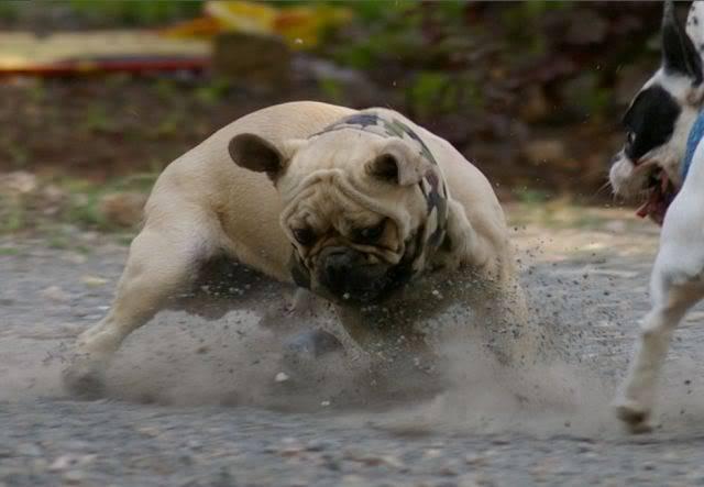 Les chiens Fançais...... 09-Web