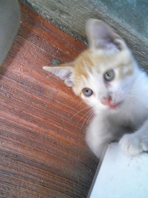 Mascotas - Página 3 090517_110843