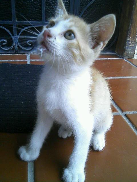 Mascotas - Página 3 090517_112037