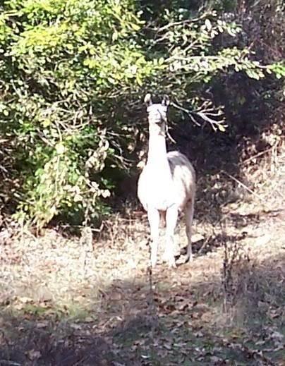 Strange encounters Llama