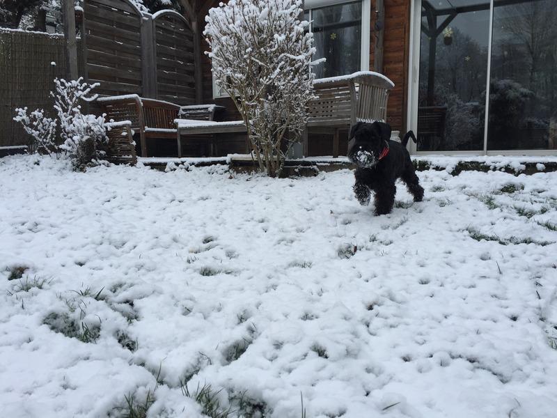 Nouveau CONCOURS PHOTOS: Un Schnauzer en hiver BFB742AF-2E9C-4284-BBE2-EC6F440C7B85_zpssrurs7lg