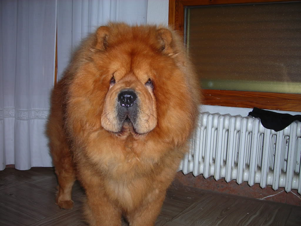 mi perro  llamado homer Imagen004