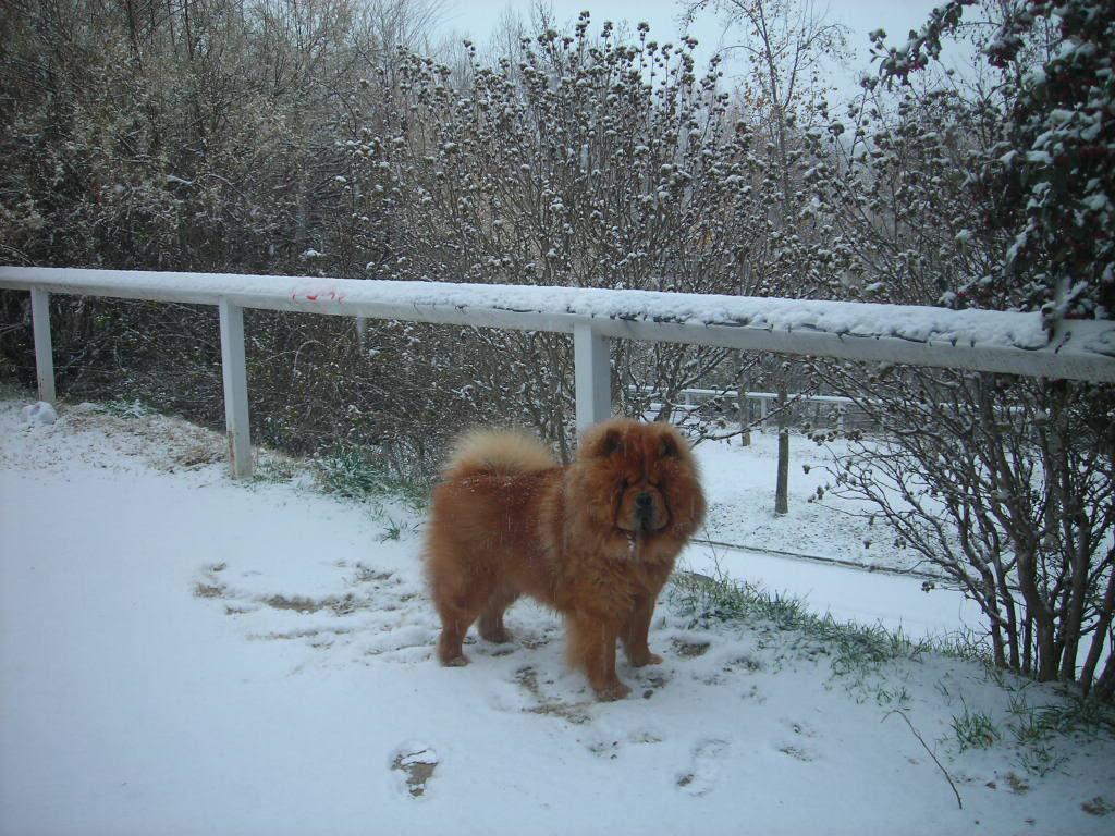 mi perro  llamado homer Imagen139-1