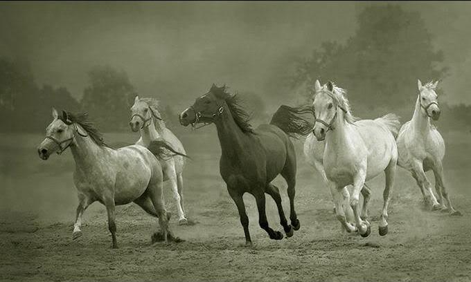 Amor por los caballos. - Página 2 Imagen5