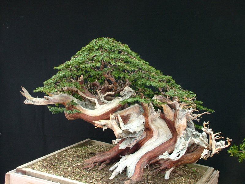 Kevin Willson Workshops at BCG's 21st Bonsai Annual Exhibition 2012 13059253331