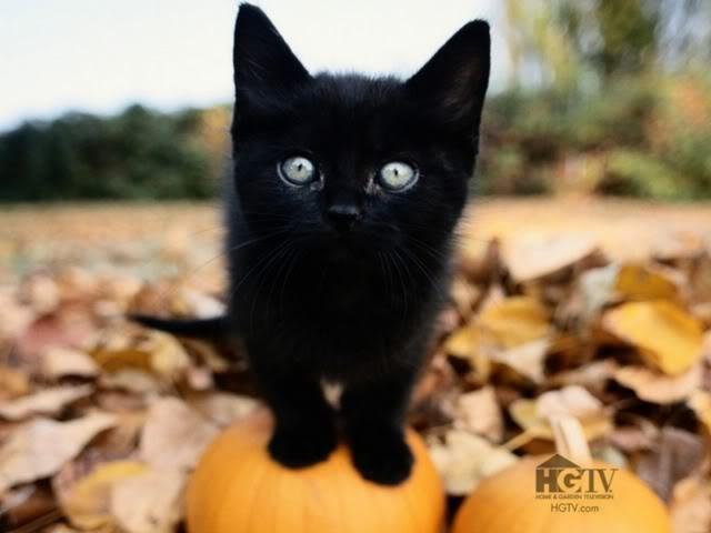 Kitty Castle Black-Cat