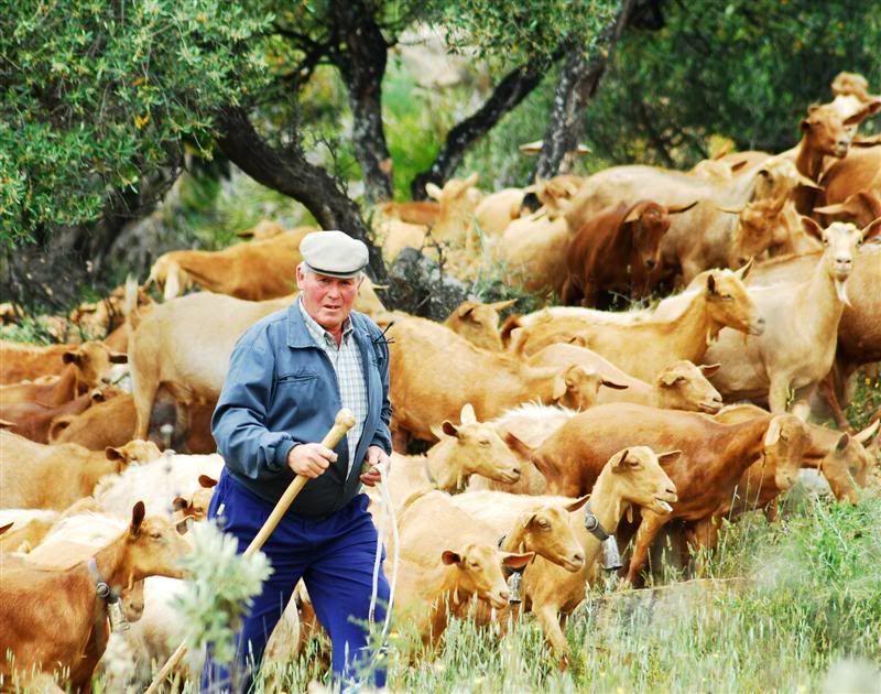 goat herder Malaga5Medium