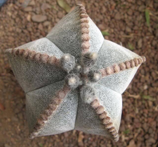 Formes presque parfaites... Astro