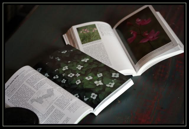 Flore printanière et Plantes sauvages des lacs rivières tourbières 090226_0008-1Redim