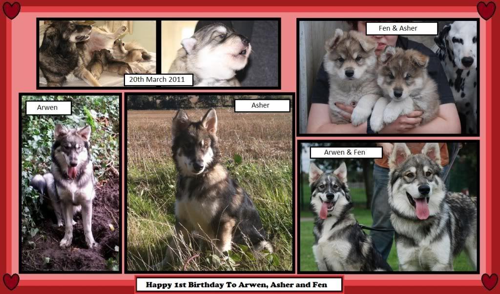Yazzlemer Puppies Birthdayarwenasherfen