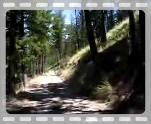 Short video Th_MVI_2550